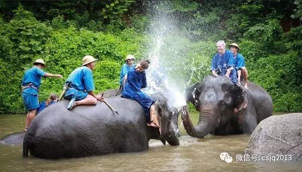 大象.webp.jpg