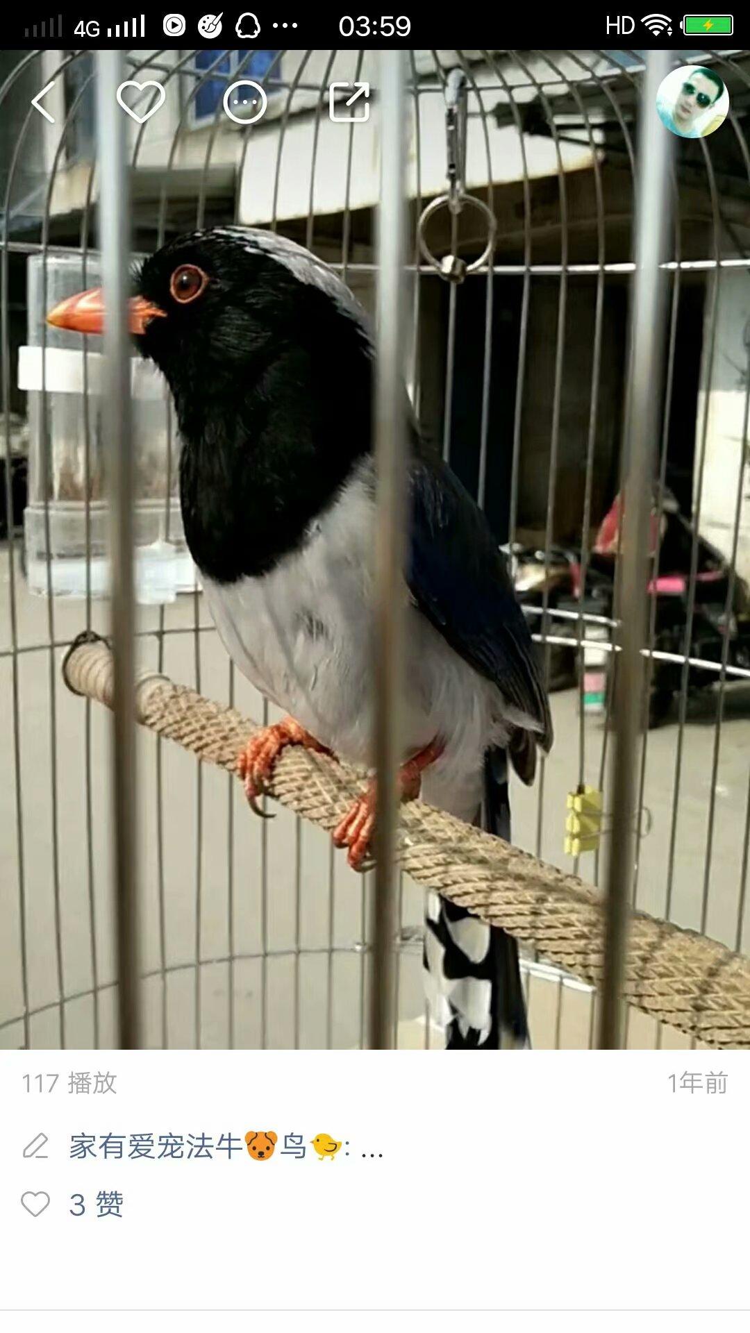 可以放飞养的小太阳鹦鹉,绿和尚鹦鹉,红嘴蓝雀